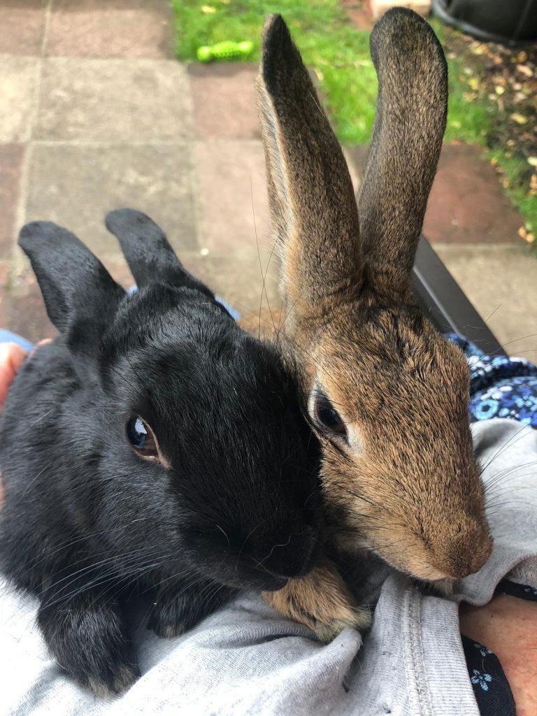 Harry & Meghan (Rabbits)