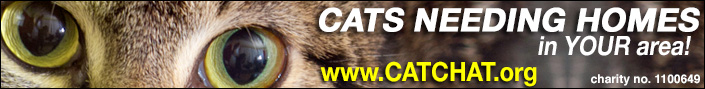 Cat Chat banner